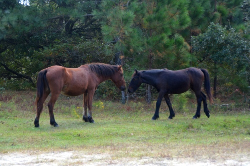 2-horses-10-21-2016-11-07-03-am