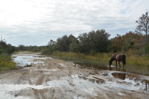 horse-and-flooded-street-10-21-2016-10-51-27-am