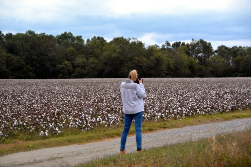 sue-cotton-field-10-22-2016-7-20-45-am