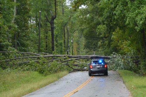 tree-across-highway-10-9-2016-8-52-39-am
