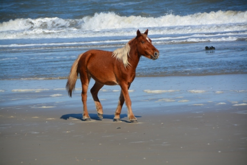 horse-on-the-beach-11-17-2016-1-57-47-pm