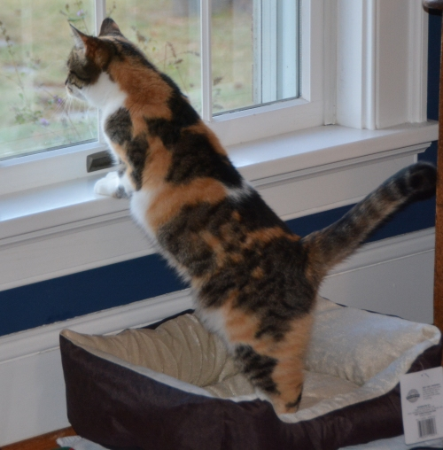 sundae-standing-in-bed-11-8-2016-5-42-18-pm