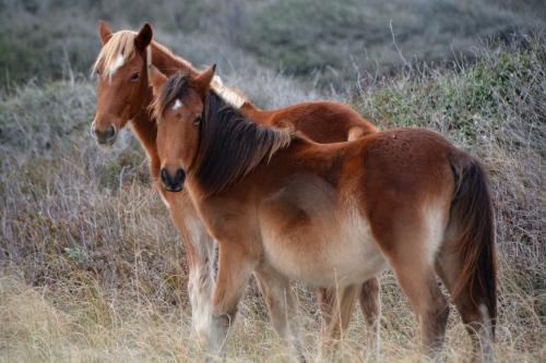 2-horses-12-4-2016-1-26-002