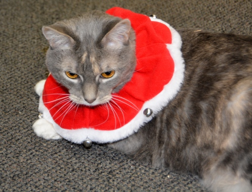 sundae-collar-best-12-18-2016-5-04-14-pm