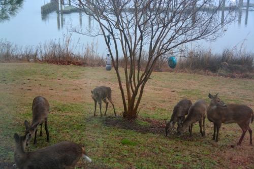 6-deer-1-22-2017-7-33-23-am