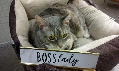 boss-lady1