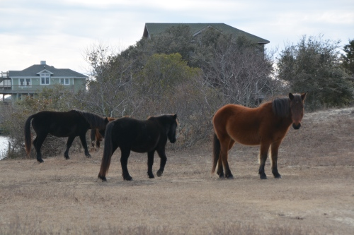 three-horses-12-31-2016-1-30-45-pm