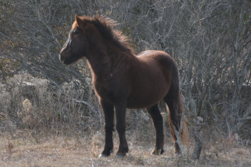 windblown-stallion-12-31-2016-1-39-33-pm