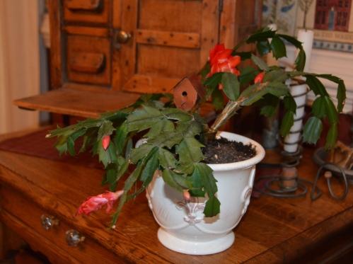 valentine-cactus-2-9-2017-2-28-01-pm