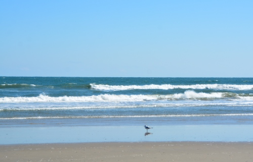 ocean-2-26-2017-11-32-50-am
